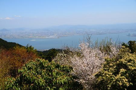 桜の向こうの琵琶湖