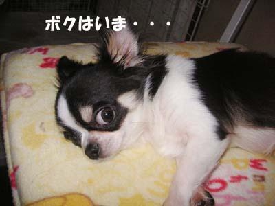 Photos: アラン・・・