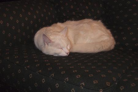 バッパの猫