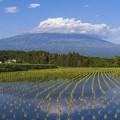 写真: 5月の富士山 Part2