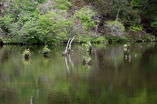 湖面に立ち枯れの木