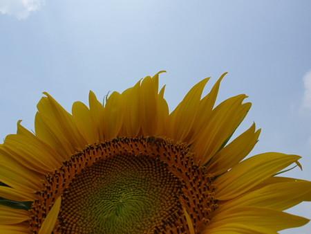 青空と向日葵