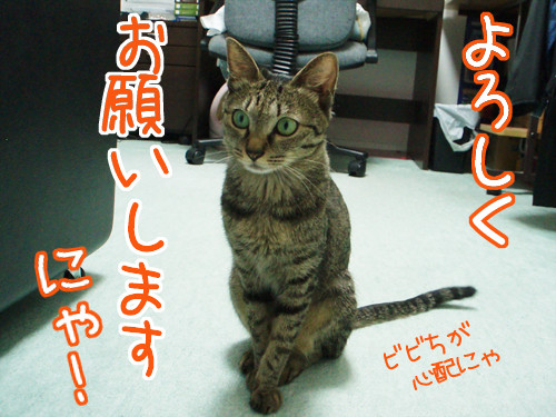 Photos: よろしくお願いしますにゃ~!