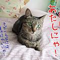 Photos: 主役はあたしにゃ!