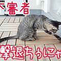 Photos: 【猫ムービー】不審者撃退ちうにゃ!