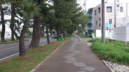 14052008_知立松並木