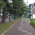 Photos: 14052008_知立松並木