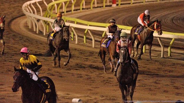 Photos: [140402大井11R東京スプリント]引き上げてくる各馬。ビジンちゃんも無事帰還