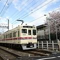 6030系急行と桜