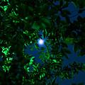 写真: 月下の葉桜