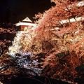 053 上田城址公園千本桜まつり2 by ホテルグリーンプラザ軽井沢