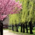 (25)長居植物園