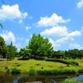 Photos: 新緑と青空V
