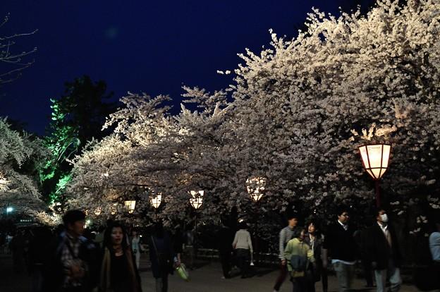 弘前城の桜(弘前公園) _49