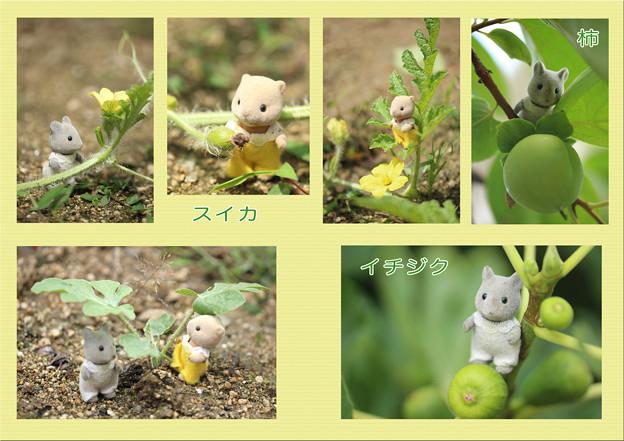 庭散歩1♪