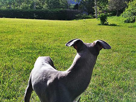 飛行犬 (6)