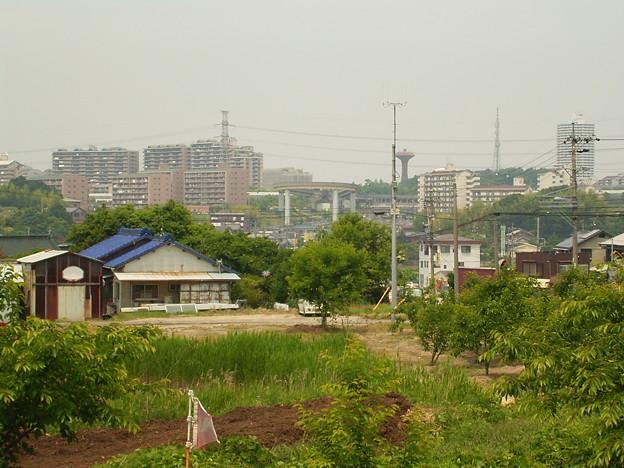 写真: 喫茶菩提樹から見た桃花台ニュータウン