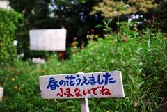 学校の小庭