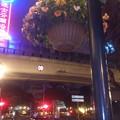 街灯の花(マカオ)