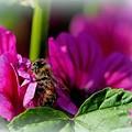 花粉まみれでございます......