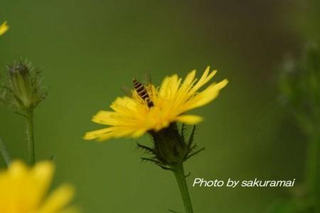 蜂の子・・・蜜を求めて