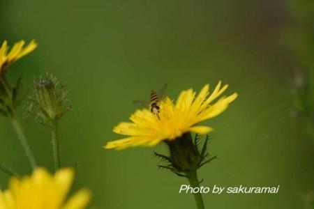 蜂の子のフライト