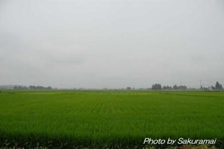 雨に煙る田園
