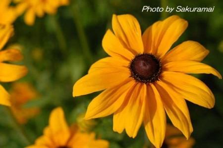 巨人のオレンジの花