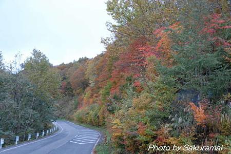 峠道の紅葉