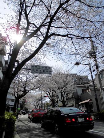 かむろ坂(禿坂)_さくら・花見-04