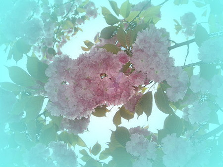 islands of flowers in ニライカナイ-08b