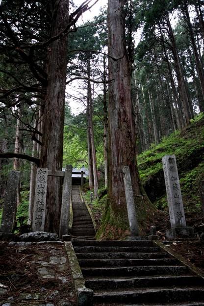 猫侍 加蘇山神社