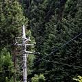 Photos: 山と電柱