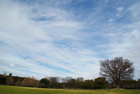 庄内緑地公園その3