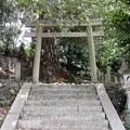Photos: 鎌八幡宮02