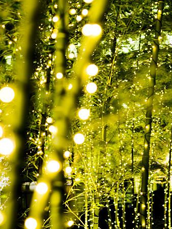 bamboo illumination