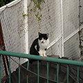 写真: 水門猫さん(R0012336)