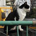 写真: 水門猫さん(R0012360)