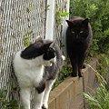 写真: 水門猫さん(R0012375)