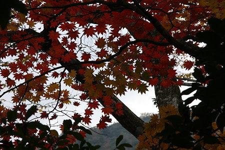 木陰の紅葉