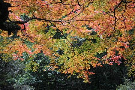 色とりどりの秋2