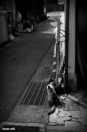 街猫417