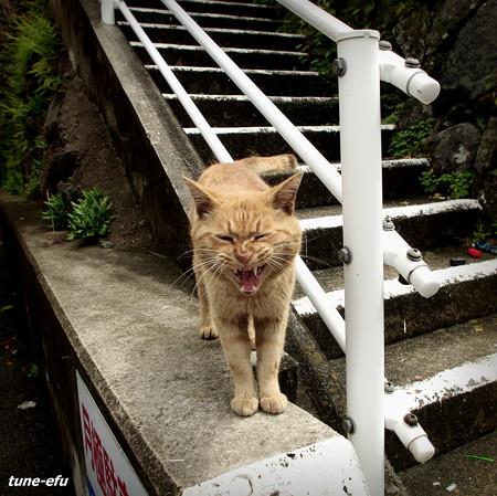 街猫418