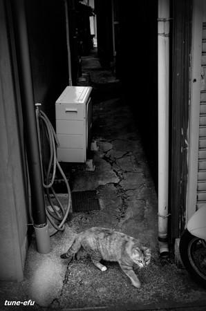 街猫419