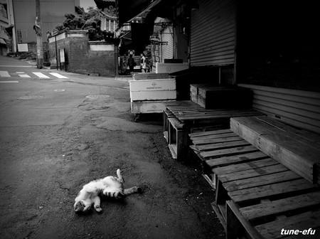 街猫430