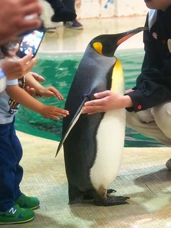 20140502 アドベン ペンギンオンアイス04