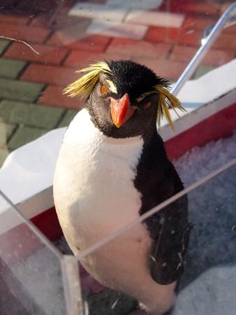 20131207 アドベン ペンギンパレード39