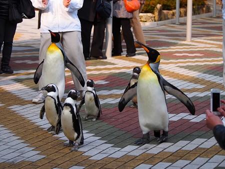 20131206 アドベン ペンギンパレード08