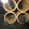 Photos: 20140514 45cmプレコ水槽のプレコ達