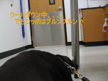 IMG_4420